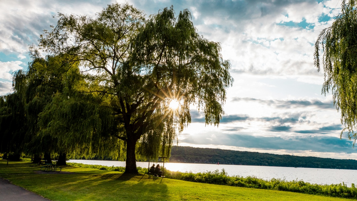 willow tree with swing overlooking Cayuga Lake